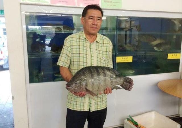 پرورش ماهی تیلاپیا در مالزی